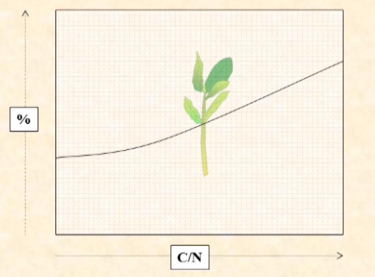 Representación esquemática del % de enraizamiento frente a la relación carbono/nitrógeno del material vegetal