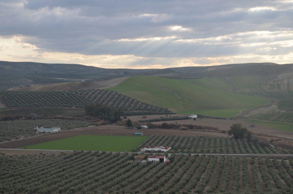 La erosión del suelo en el olivar
