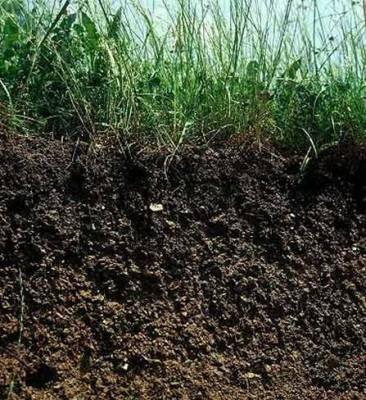corte de tierra con cubierta vegetal